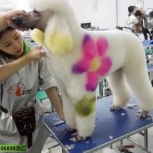 日本东京国际宠物用品博览会2020JapanPetFair